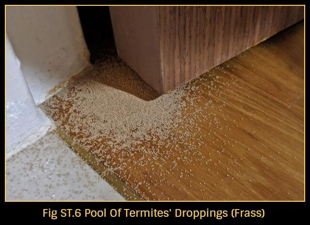 Termites Pesticon Pest Control Services Singapore